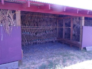 Another view of John Dey's setup for curing garlic. Image courtesy of BigJohnsGarden.com