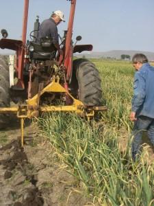 The Garlic Lifter in Progress (image courtesy of John Dey)