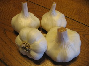 A softneck variety of garlic, Red Tock (Forever Yong Farm)