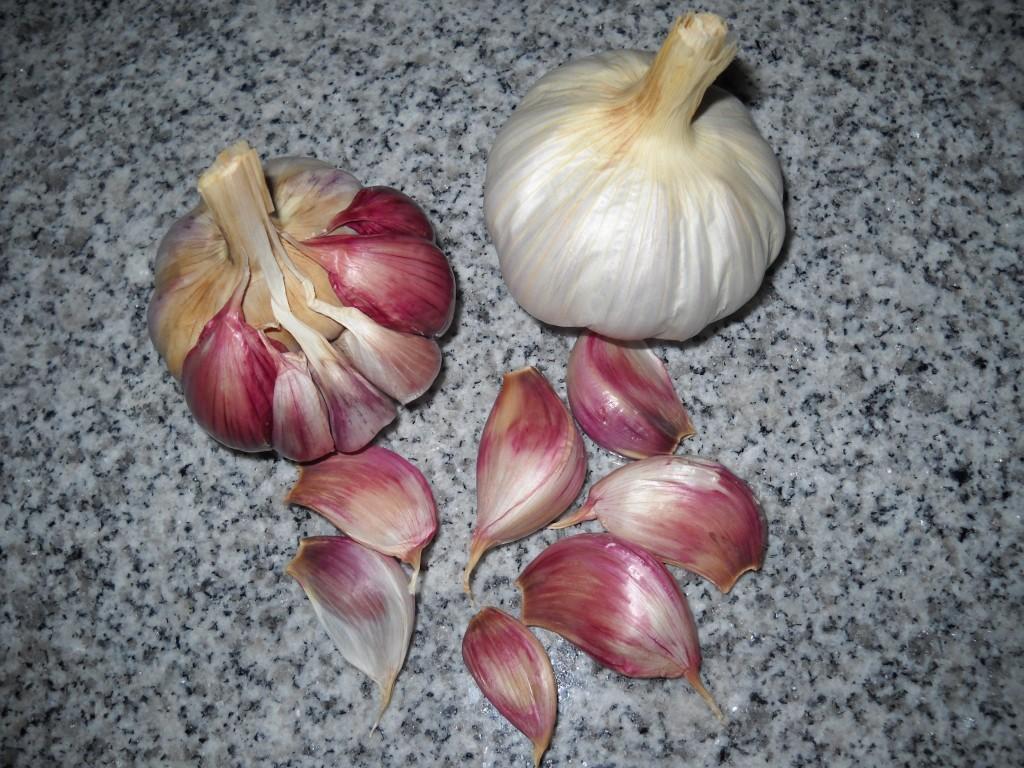 Ajo Rojo Garlic (Texasheritagebulbs.com)