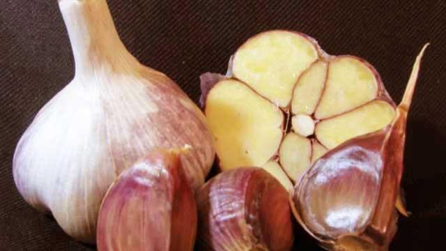 Hardneck - Marbled Purple Stripe Garlic