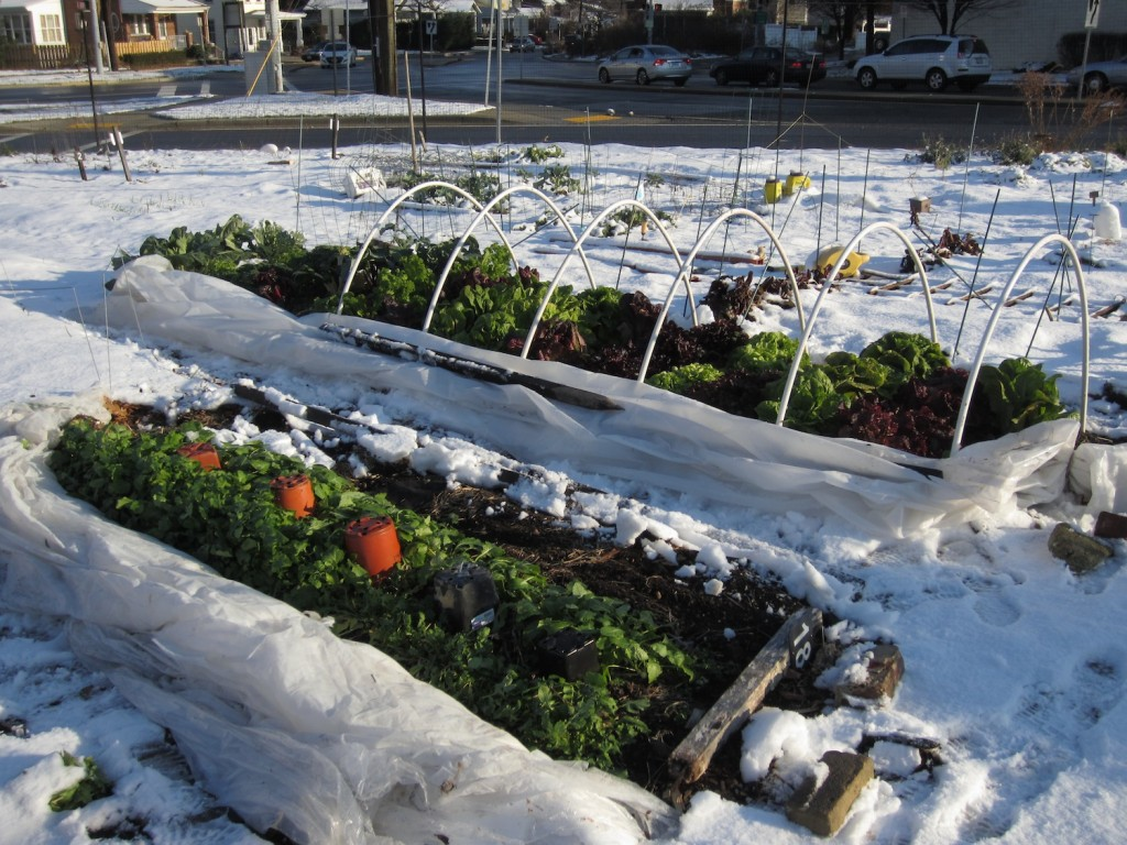 What to plant in your winter vegetable garden pacific northwest edition seedwise - Gardening mistakes maintaining garden winter ...