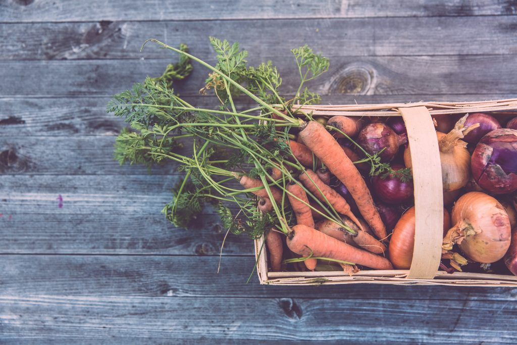 Basket of carrots and onions from vegetable garden